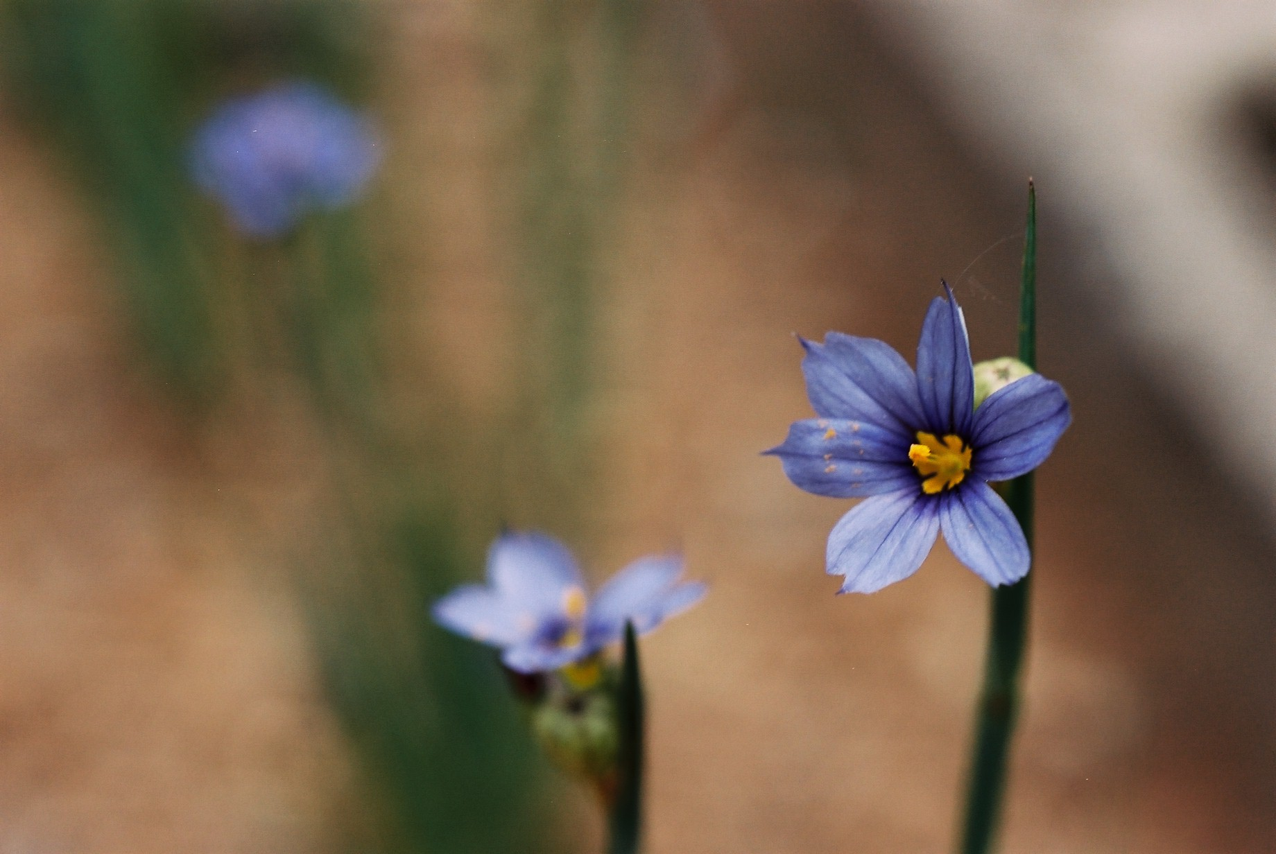 春まだ遠く…花13_a0103650_13511337.jpg