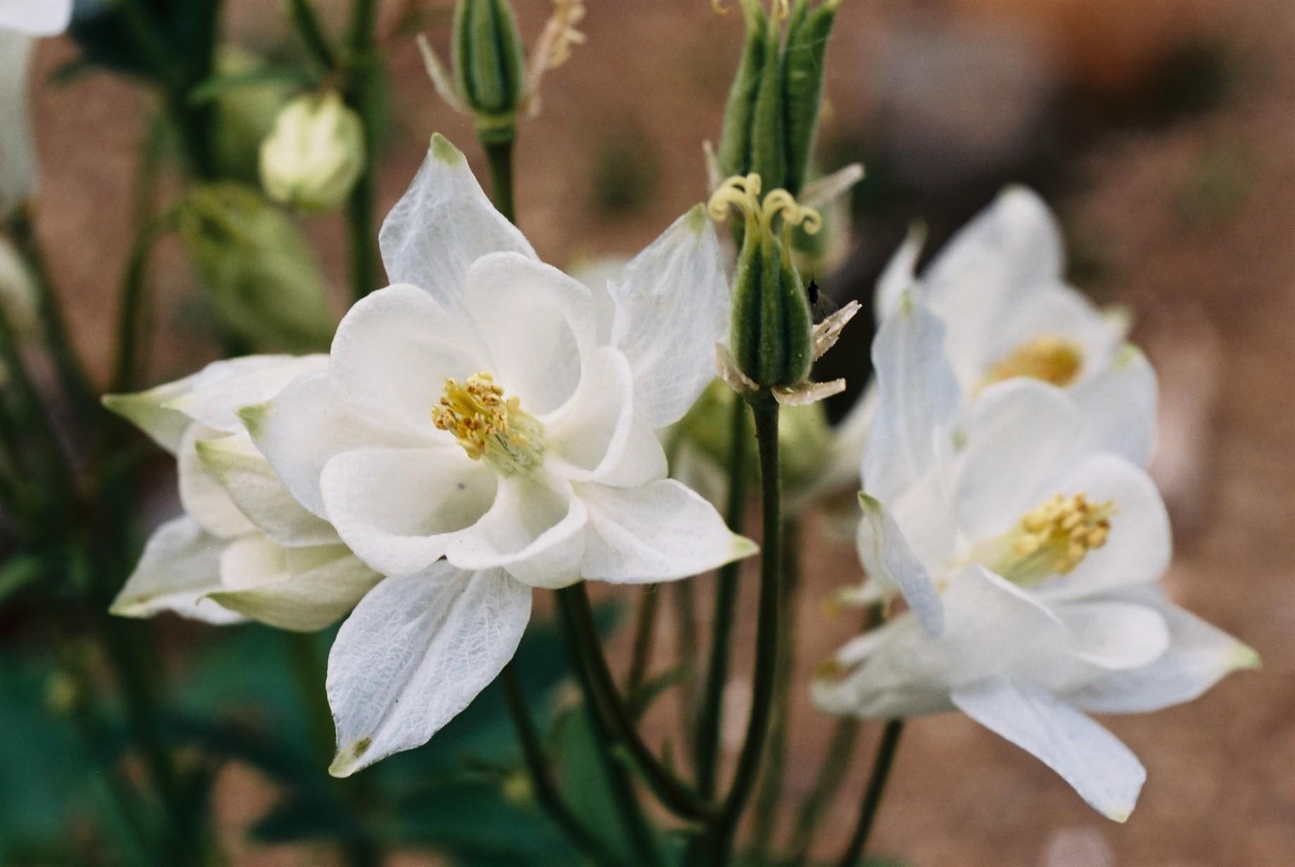 春まだ遠く…花13_a0103650_13514411.jpg