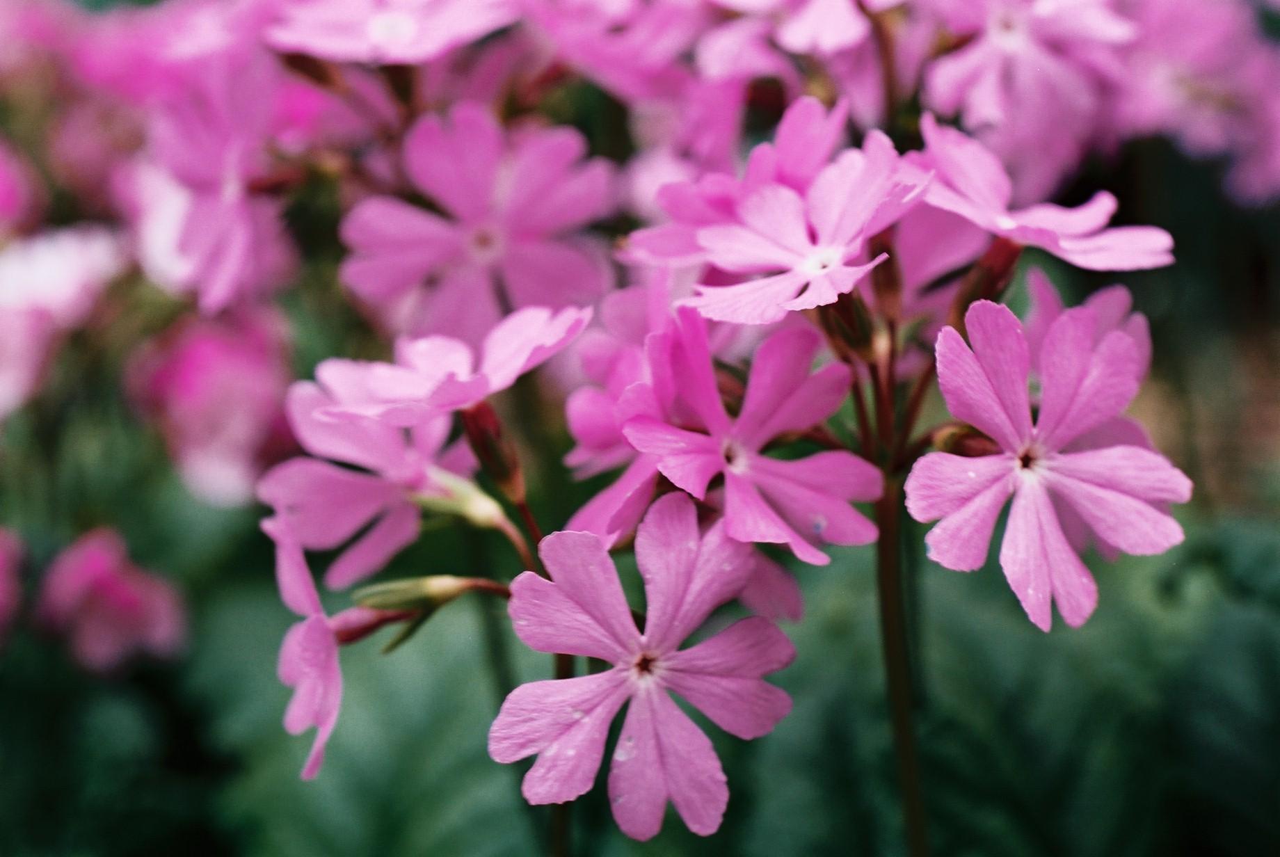 春まだ遠く…花13_a0103650_13522020.jpg