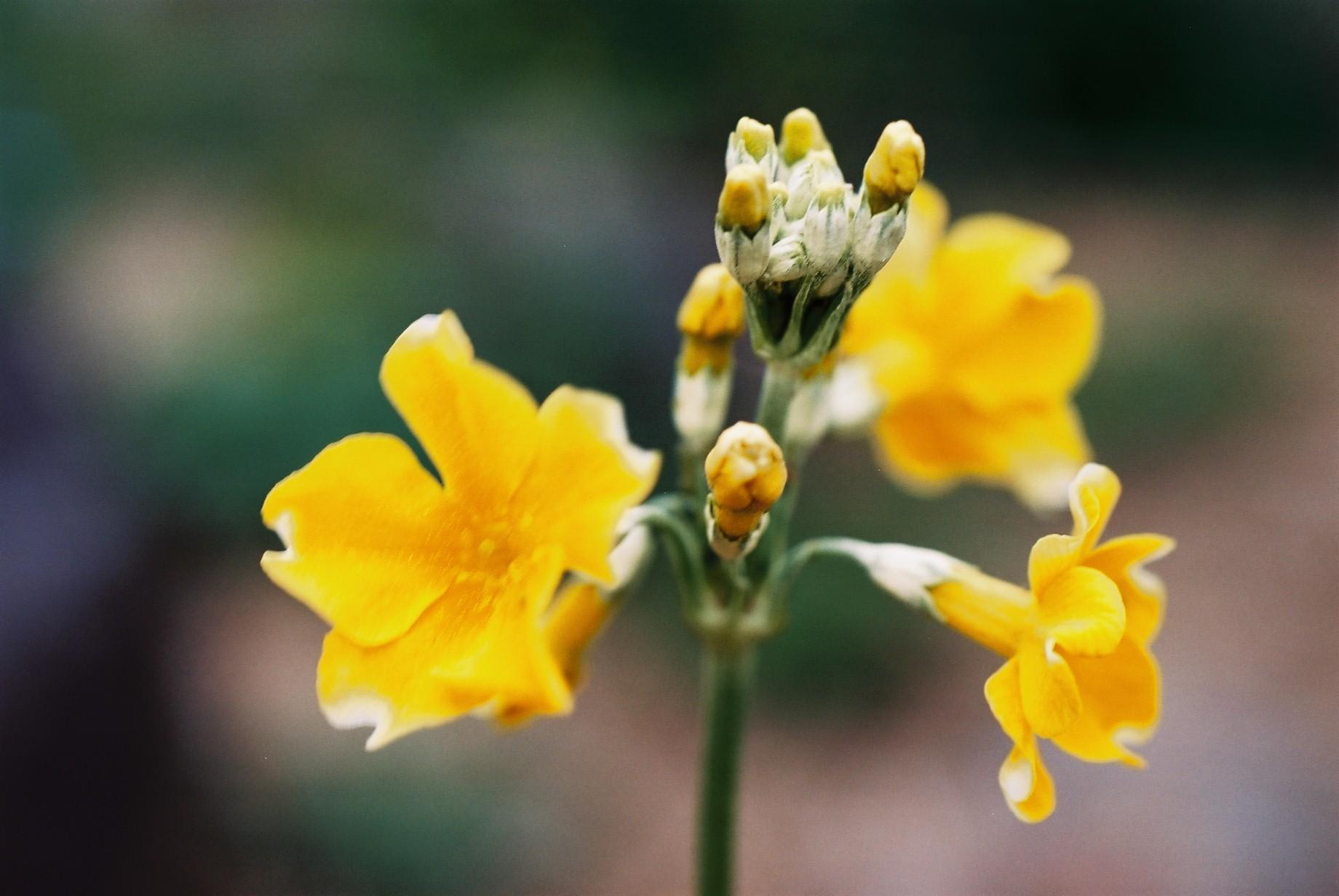 春まだ遠く…花13_a0103650_13525833.jpg