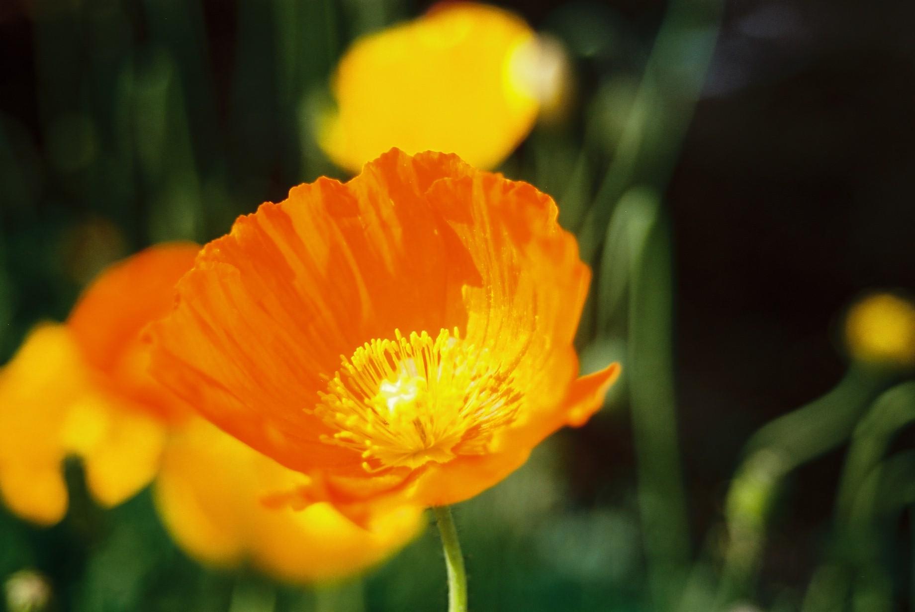 春まだ遠く…花13_a0103650_13541694.jpg
