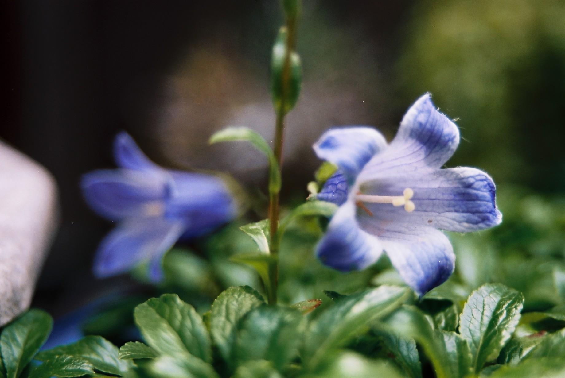 春まだ遠く…花13_a0103650_13543827.jpg