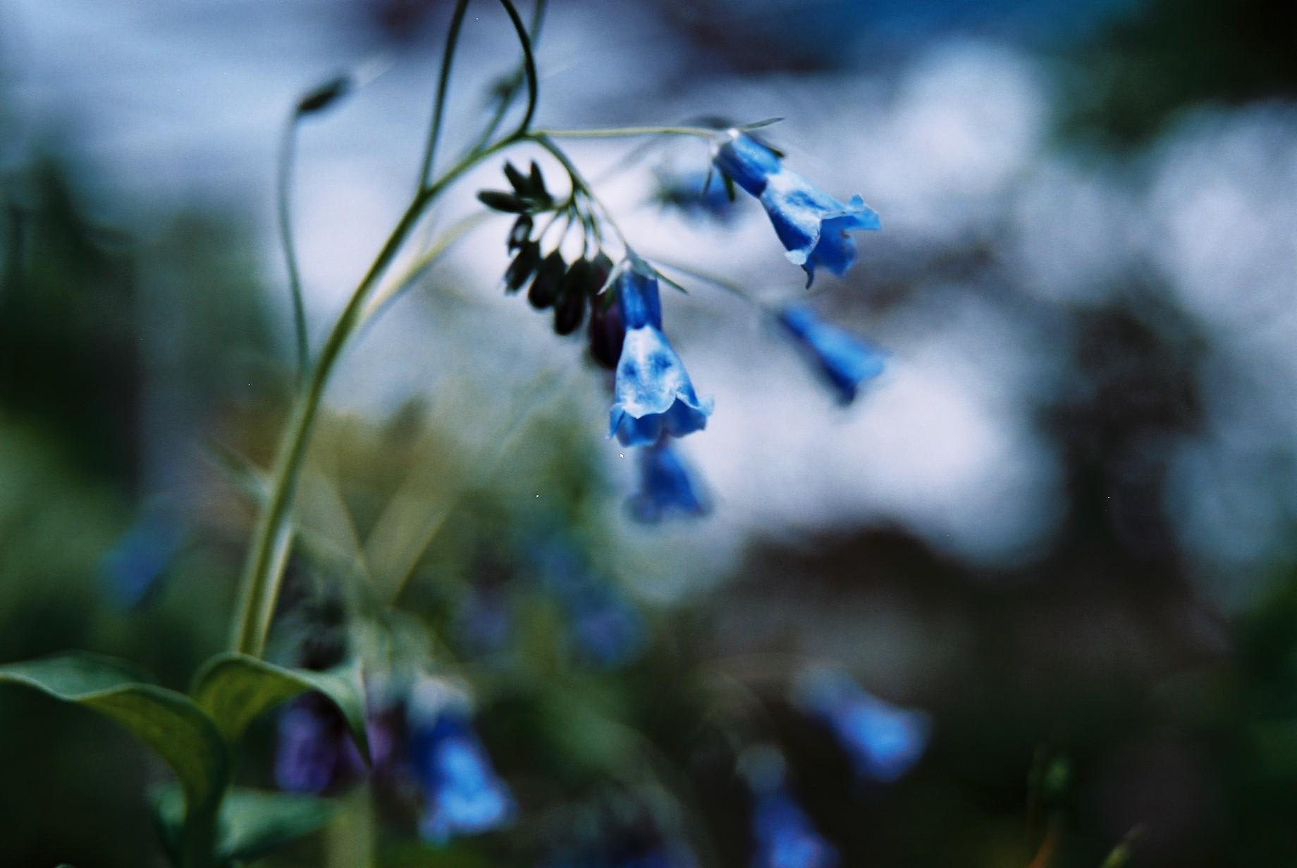 春まだ遠く…花13_a0103650_13545452.jpg