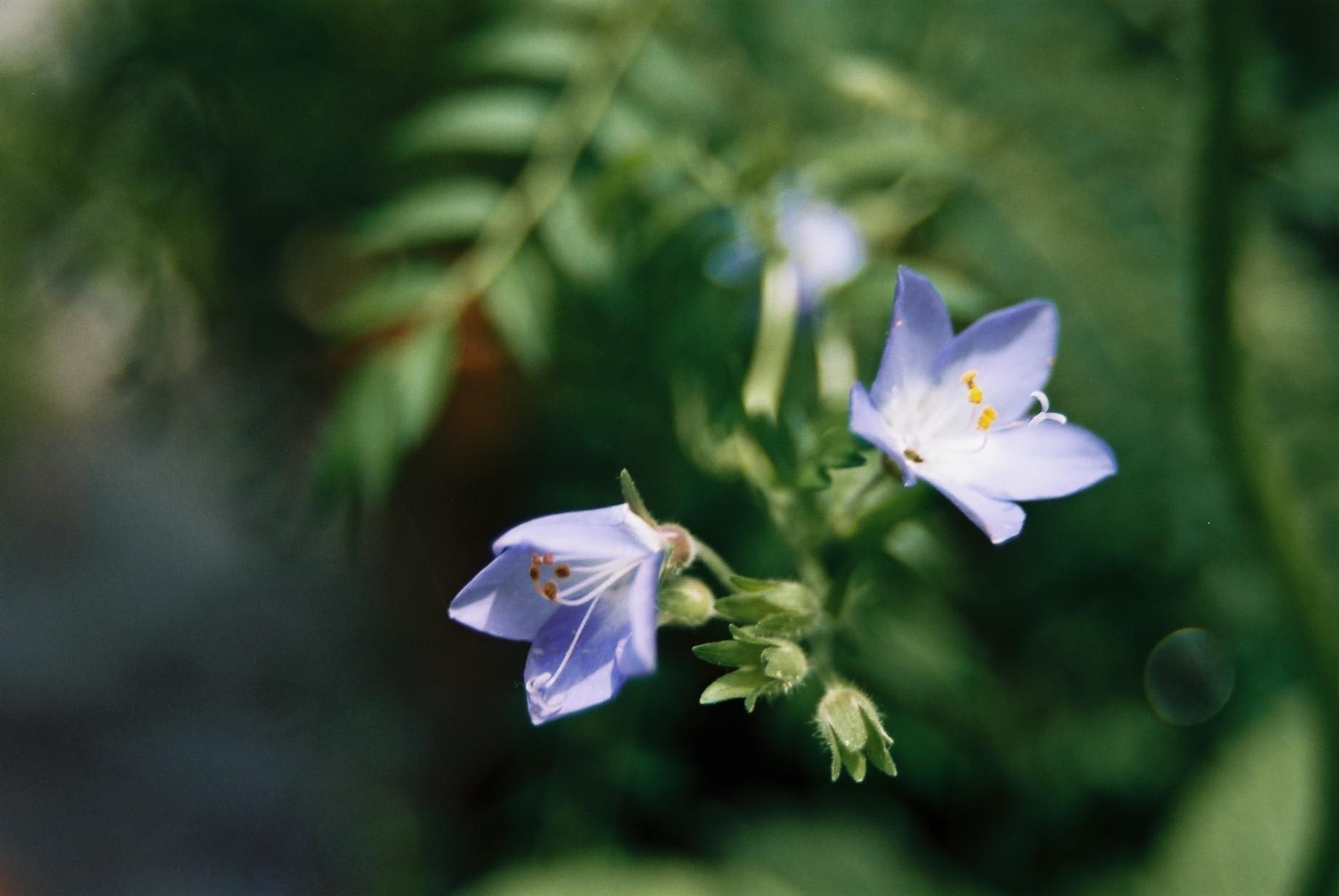 春まだ遠く…花13_a0103650_1355172.jpg