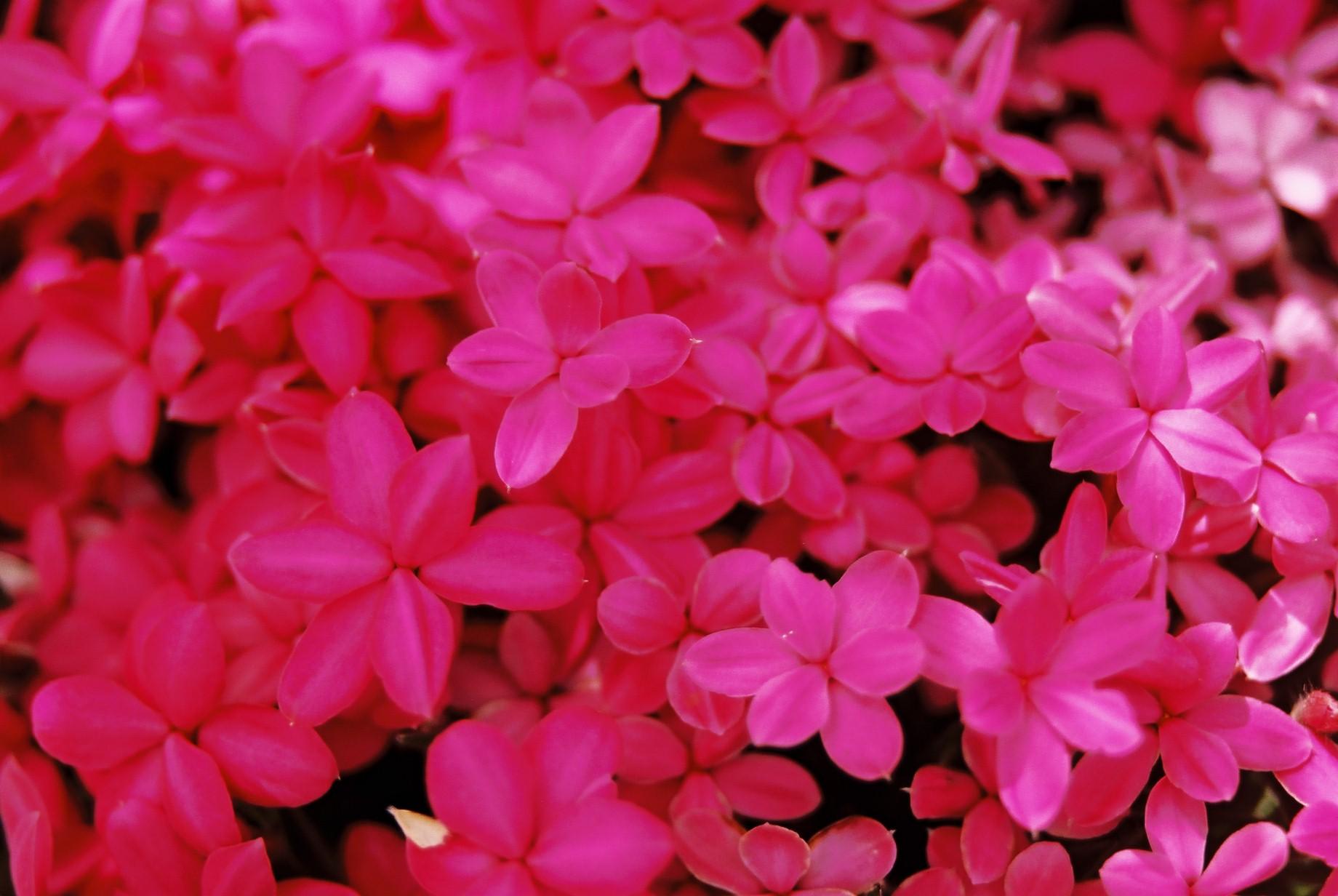 春まだ遠く…花13_a0103650_13562793.jpg