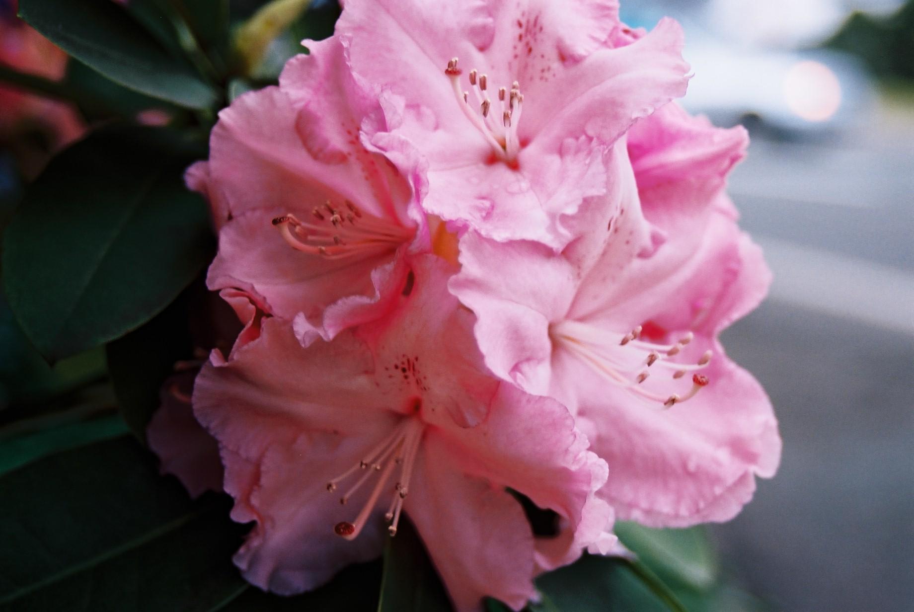 春まだ遠く…花13_a0103650_13584819.jpg