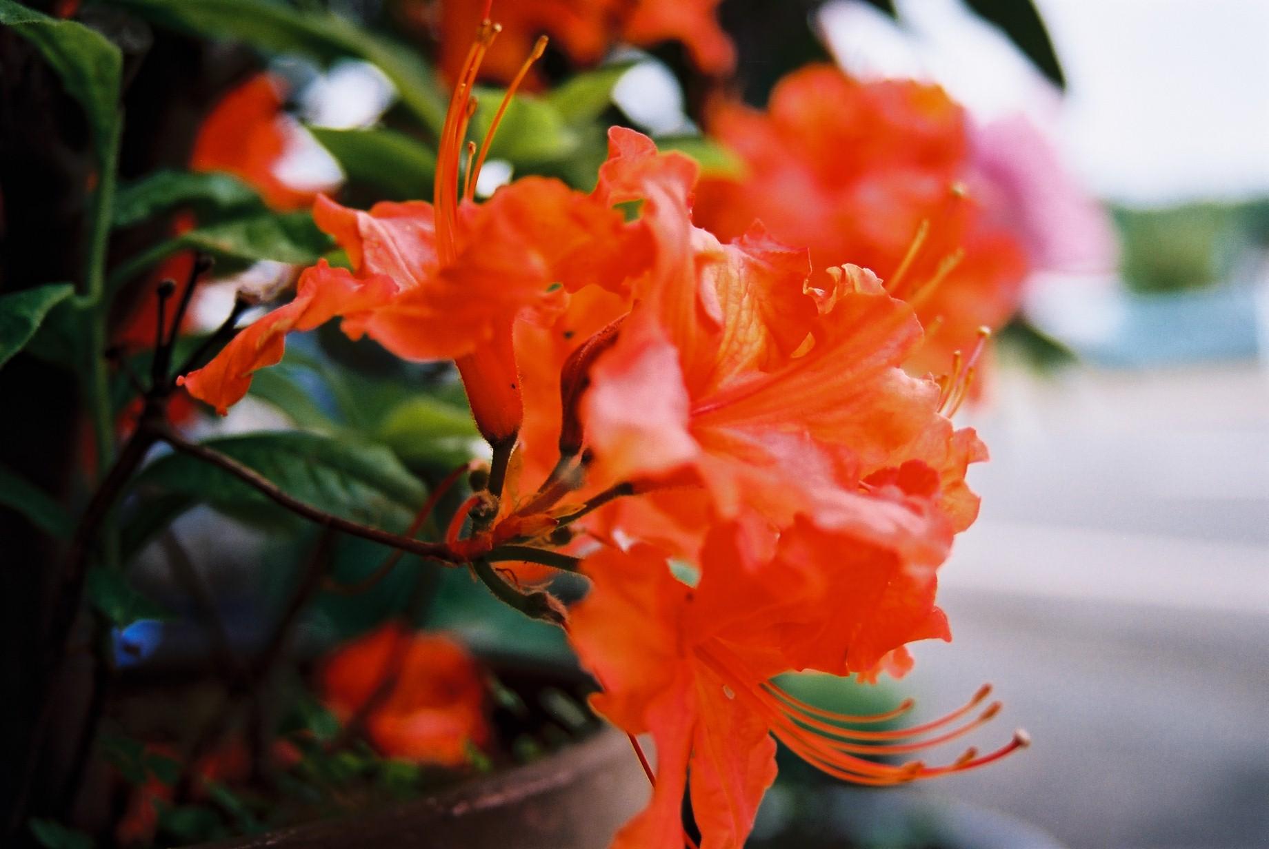 春まだ遠く…花13_a0103650_13585692.jpg