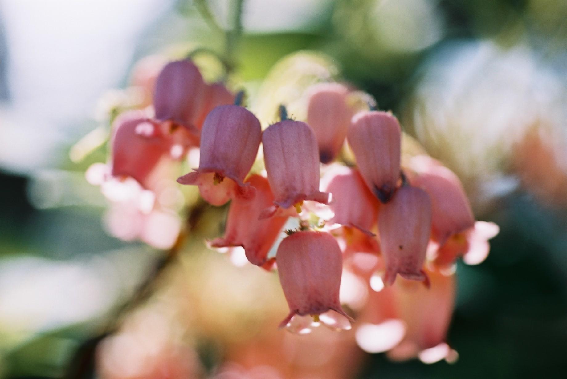 春まだ遠く…花13_a0103650_13593032.jpg