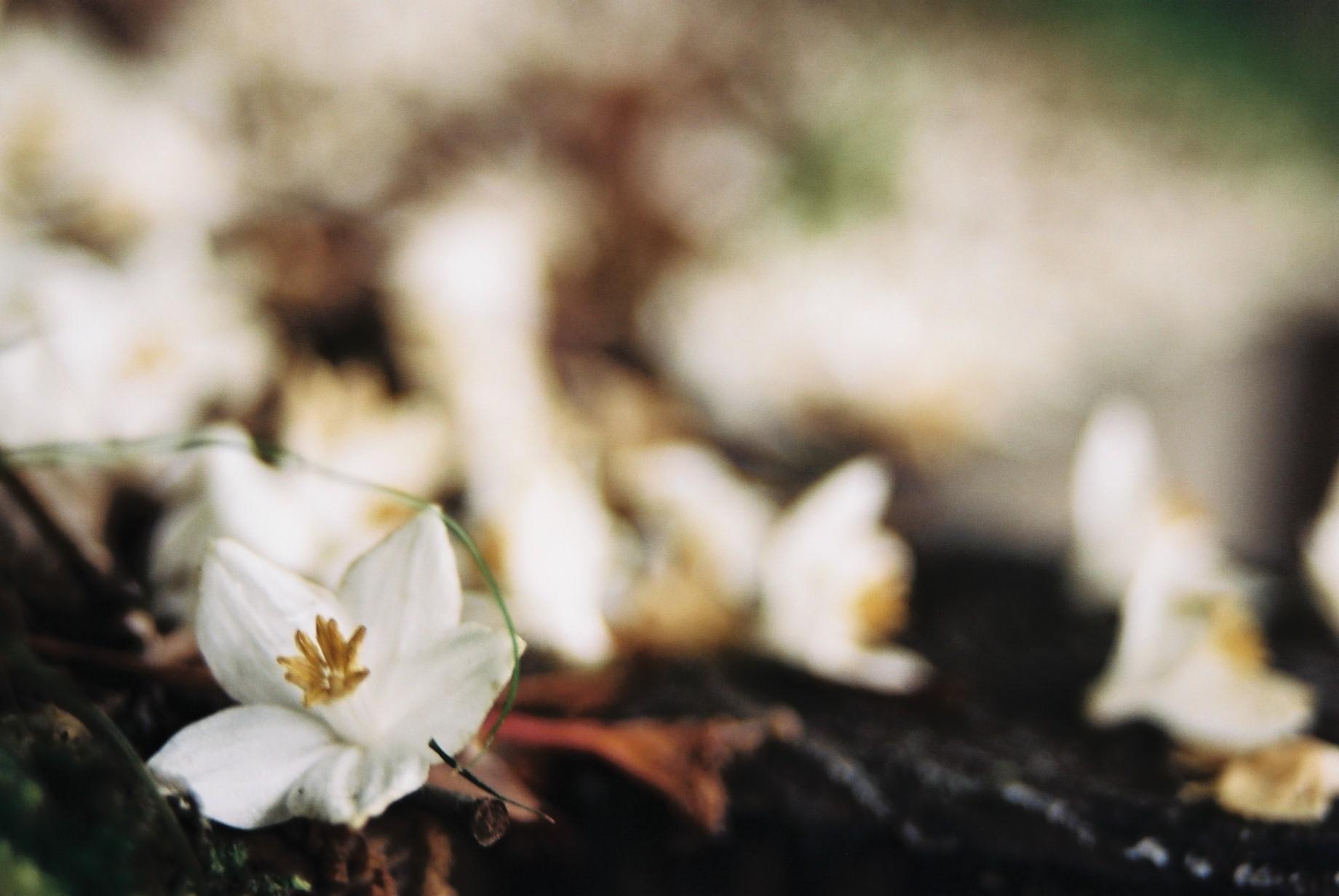 春まだ遠く…花13_a0103650_13594580.jpg