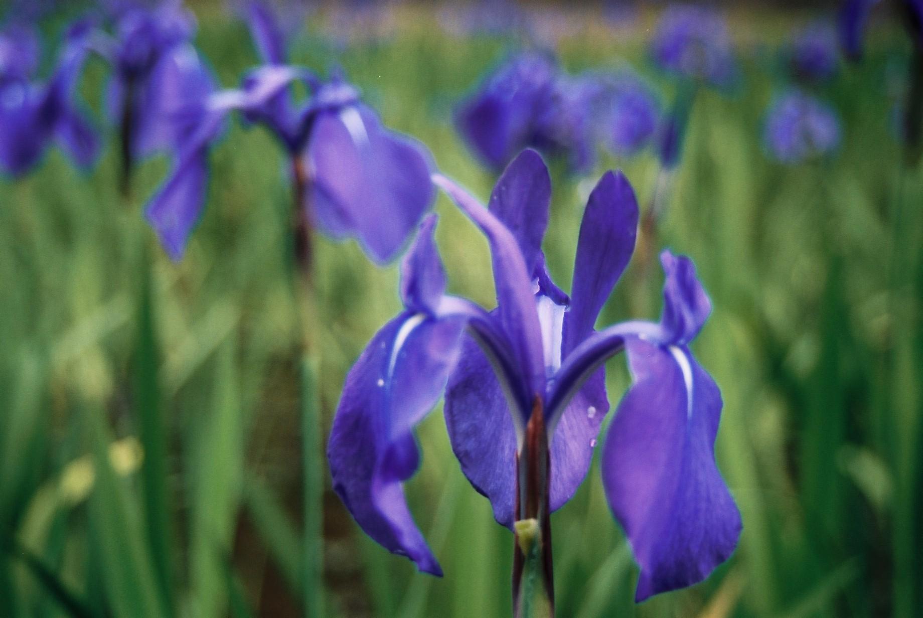 春まだ遠く…花13_a0103650_13595586.jpg