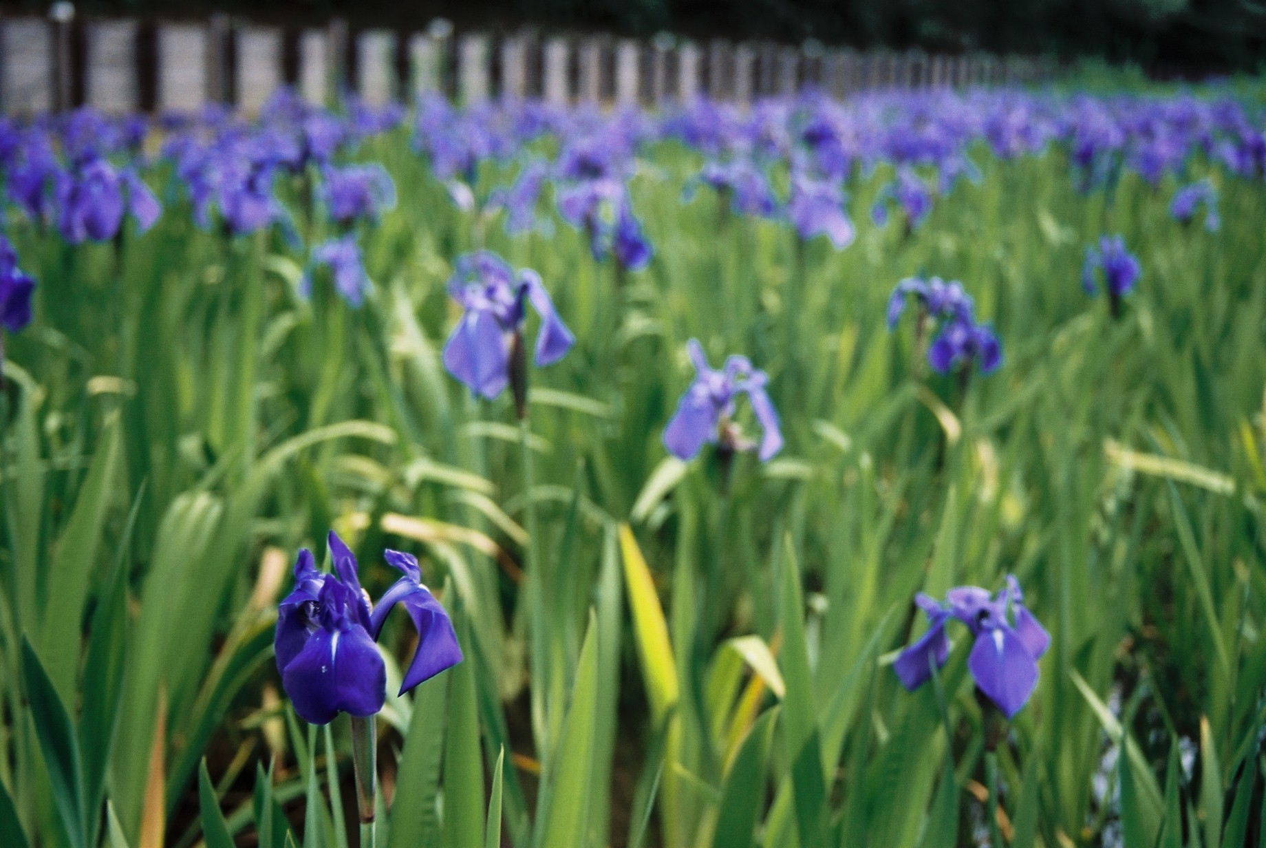 春まだ遠く…花13_a0103650_140219.jpg