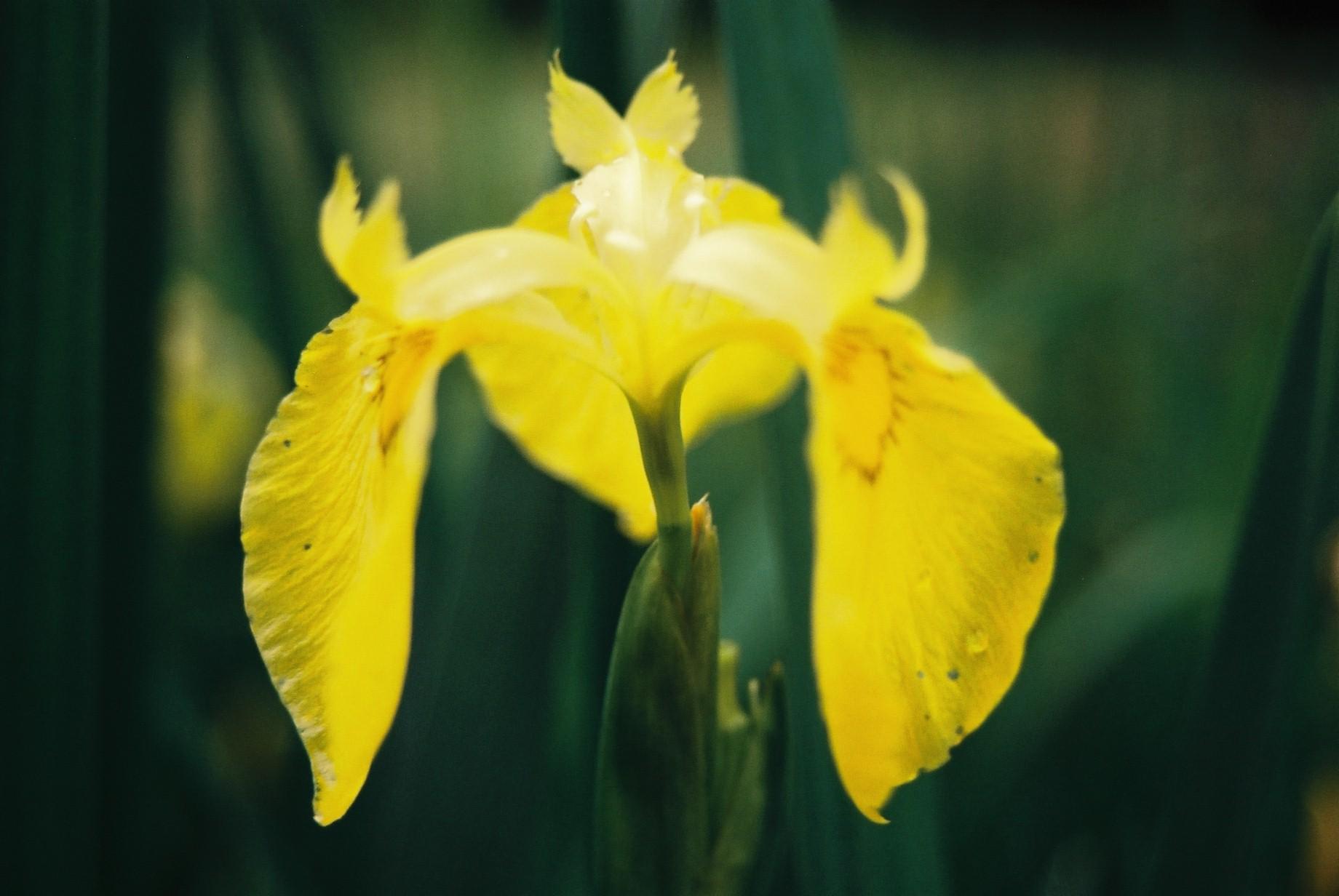 春まだ遠く…花13_a0103650_1405036.jpg