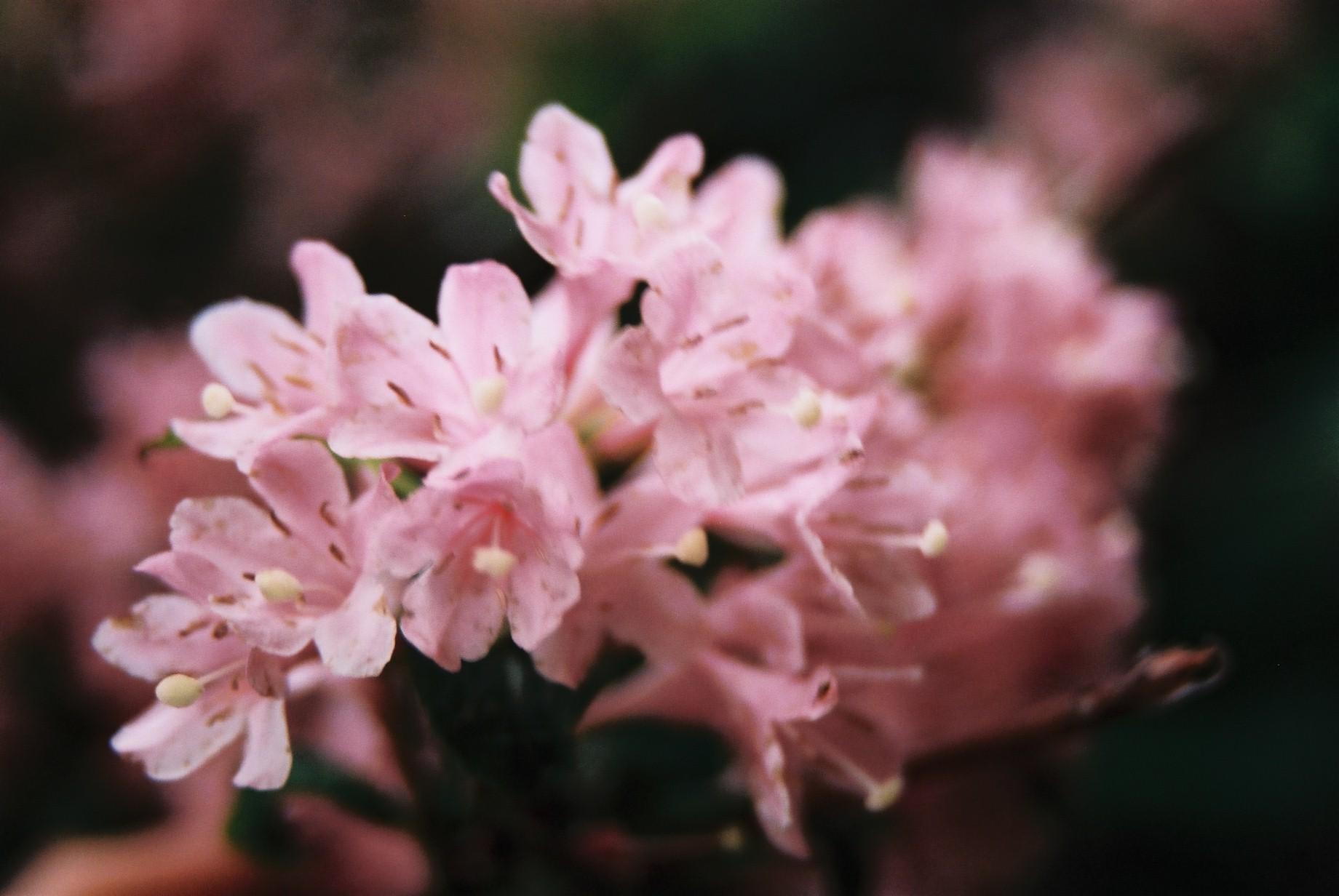 春まだ遠く…花13_a0103650_1405897.jpg
