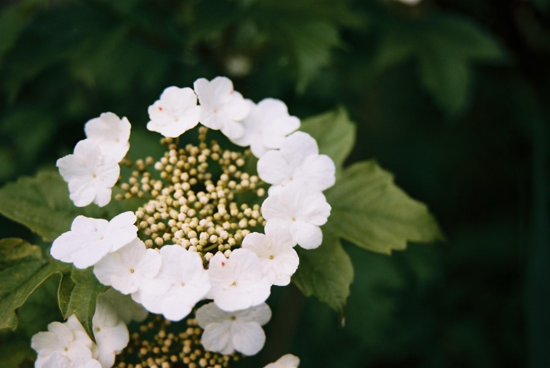 春まだ遠く…花13_a0103650_141585.jpg