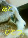 c0052756_134519.jpg
