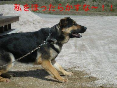 b0113663_97305.jpg