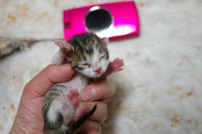 3月20日生まれの4兄妹_a0064067_0333691.jpg