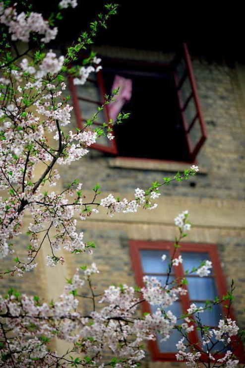 ■武漢の桜_e0094583_7341615.jpg