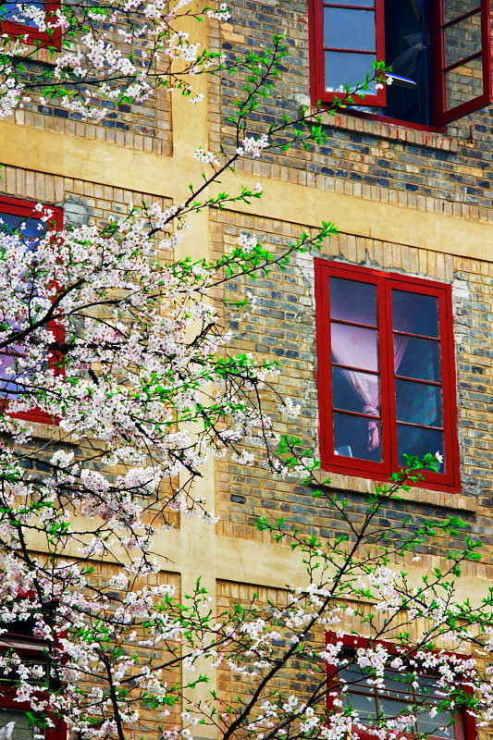 ■武漢の桜_e0094583_7374136.jpg