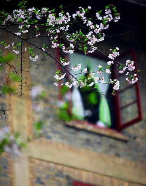 ■武漢の桜_e0094583_7375877.jpg