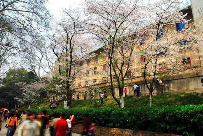 ■武漢の桜_e0094583_7424674.jpg