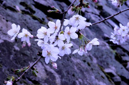 花盛り。_b0133890_21451444.jpg
