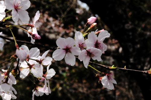 花盛り。_b0133890_2154255.jpg