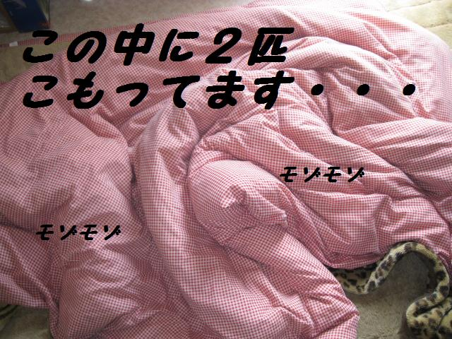f0180994_23312814.jpg