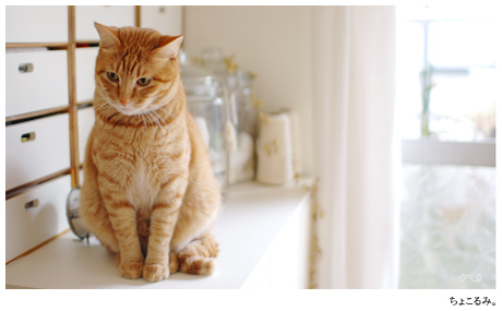 オレンジ色の猫監督。