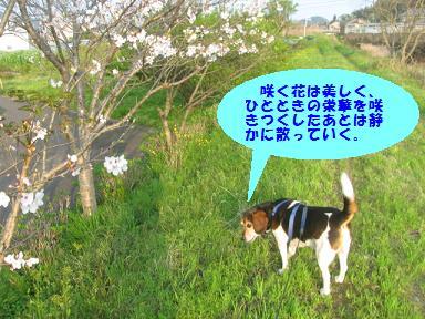 d0104209_219681.jpg