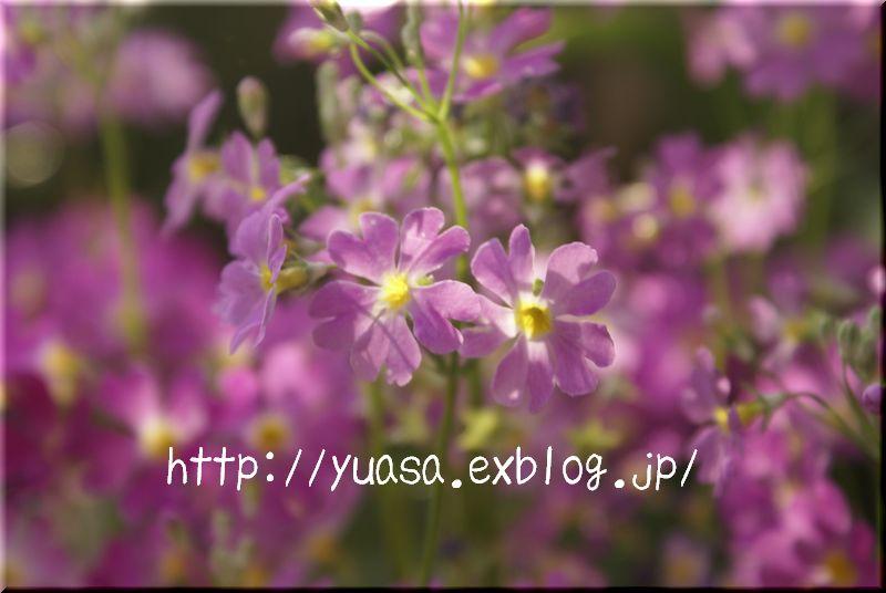 f0156117_1842372.jpg