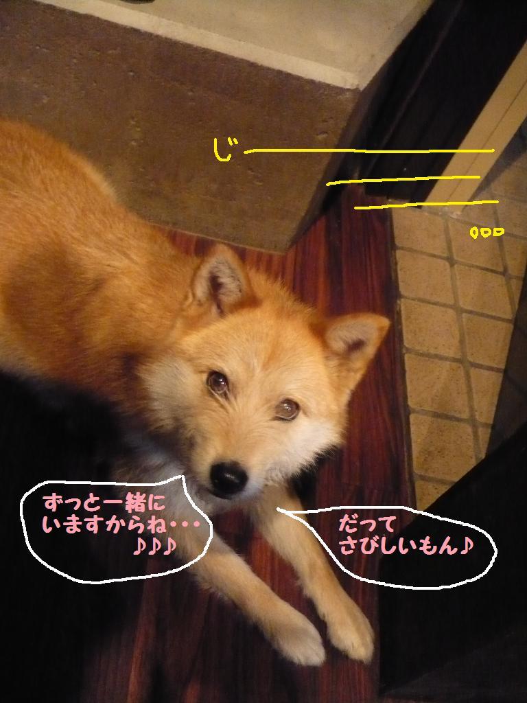 b0130018_15401235.jpg