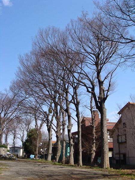 お寺の桜が咲いていました。_f0077521_10412461.jpg