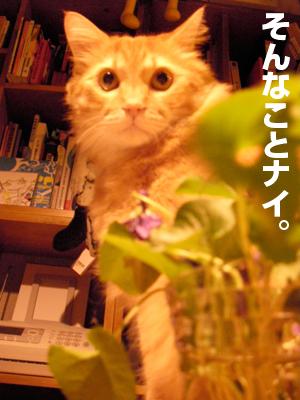 b0080632_1833875.jpg