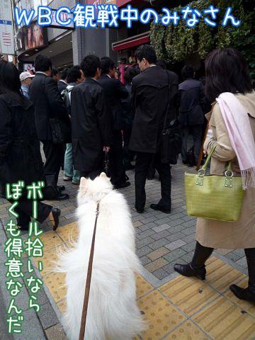 おめでとう侍ジャパン!_c0062832_1773790.jpg