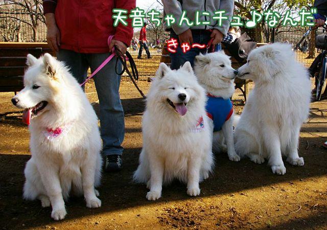 おめでとう侍ジャパン!_c0062832_177532.jpg