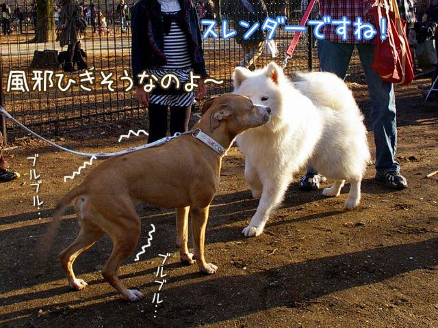 おめでとう侍ジャパン!_c0062832_1775859.jpg
