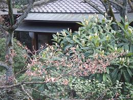 2009年3月24日 桜実況中継_c0078659_1521717.jpg