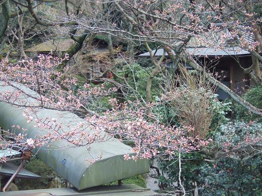 2009年3月24日 桜実況中継_c0078659_1585676.jpg