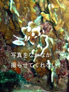 ラチャヤイ島いい感じぃ~~♪_f0144385_19522325.jpg