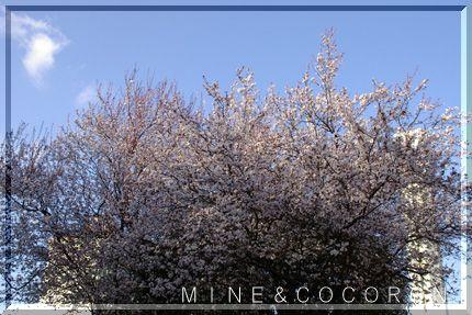 春本番_a0053987_2212457.jpg
