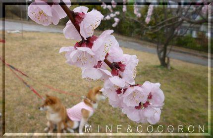 春本番_a0053987_2214094.jpg