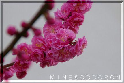 春本番_a0053987_22143188.jpg