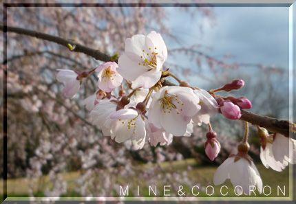 春本番_a0053987_22181295.jpg