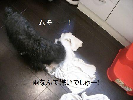 f0197317_1514156.jpg