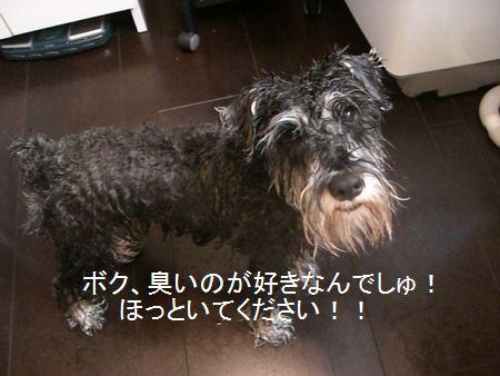 f0197317_15162036.jpg