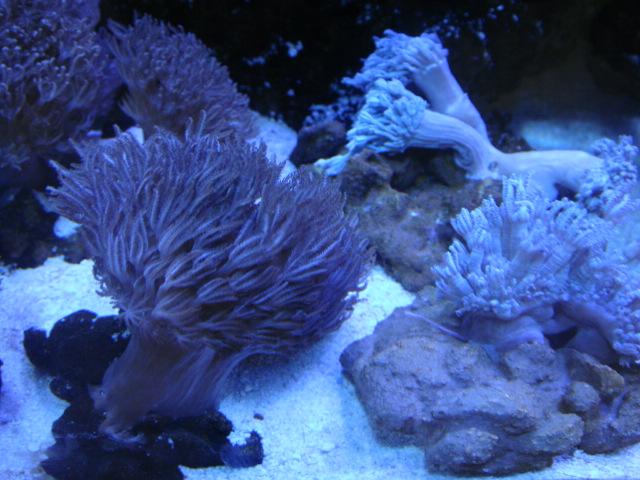 海水魚・サンゴ・水草・日本産淡水魚_f0189122_14132249.jpg