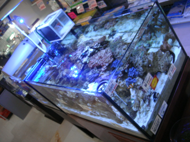 海水魚・サンゴ・水草・日本産淡水魚_f0189122_17284191.jpg
