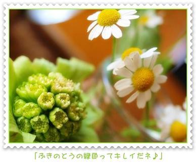 c0145250_11511991.jpg