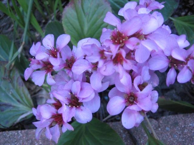 自宅の庭にも春のお花が咲いていました。_f0181251_1751669.jpg